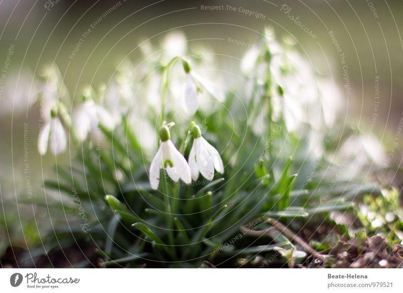 Nature Plant Green White Flower Spring Happy Garden Brown Park Weather Contentment Happiness Esthetic Beginning Joie de vivre (Vitality)