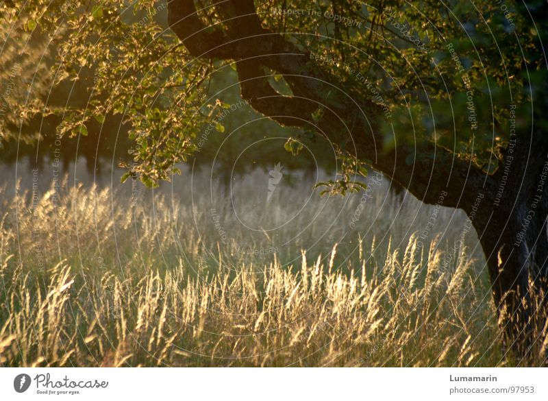 evening sun Relaxation Calm Summer Nature Landscape Beautiful weather Wind Warmth Tree Grass Leaf Meadow Field Brown Yellow Green Evening sun Sunset