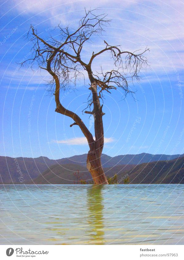 floating tree Tree Hover Hope Water Joy Mexico