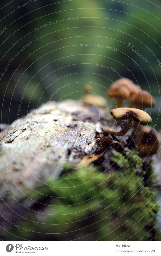 Between liver and spleen still fits a mushroom Environment Nature Landscape Plant Bushes Forest Growth Mushroom Tree trunk Moss Forest walk Worm's-eye view