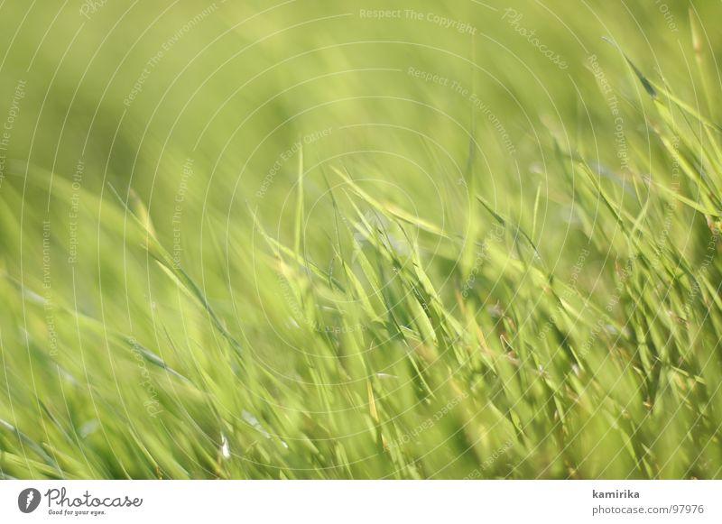 Ocean Green Summer Jump Grass Spring Fresh Blade of grass Smooth Carpet