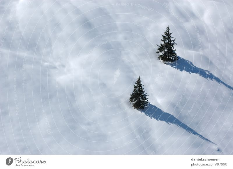 White Tree Vacation & Travel Winter Landscape Snow Gray Leisure and hobbies Hiking Trip Driving Mysterious Fir tree Skier Unclear Winter vacation