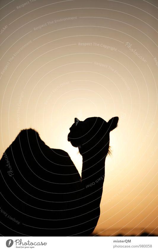 Summer Sun Warmth Art Contentment Esthetic Desert Hot Summer vacation Camel Sahara Camel hump Abu Dhabi Camel market Head of a camel