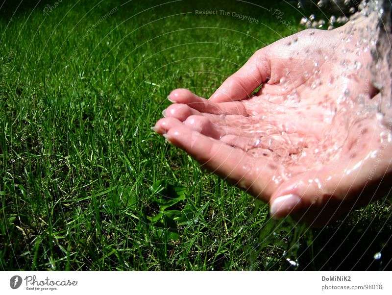 Nature Beautiful Green Water Sun Hand Joy Meadow Grass Garden Park Fresh Drops of water Lawn Transparent Blade of grass