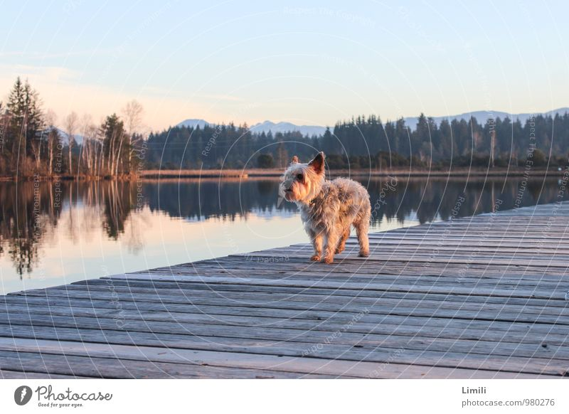 dog catwalk Well-being Contentment Relaxation Swimming & Bathing Leisure and hobbies Vacation & Travel Trip Nature Landscape Water Horizon Autumn