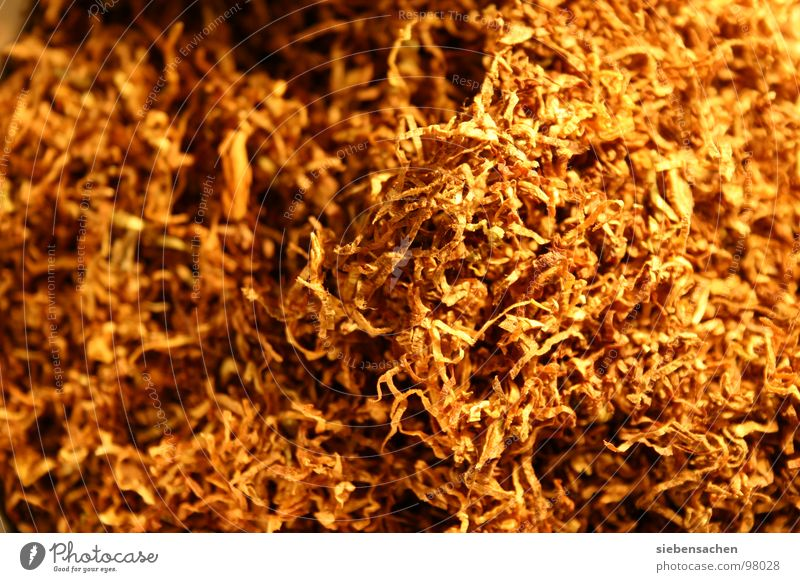 i hate smoking Brown Tobacco Cigarette Background picture Dangerous Gold Smoking Smoke texture Structures and shapes Search