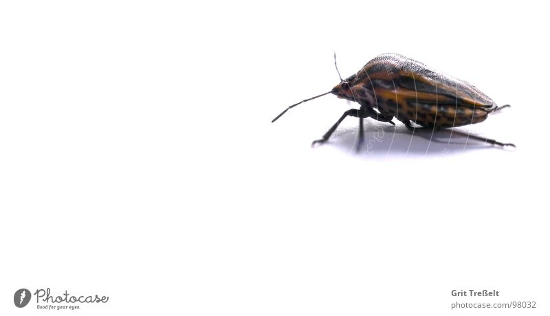 Red striped bug Bug Squash bug Green Grass Blade of grass Meadow Leather Insect Looking