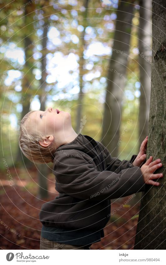 Human being Child Nature Tree Forest Life Autumn Boy (child) Above Leisure and hobbies Infancy Hiking Large Trip To go for a walk Curiosity
