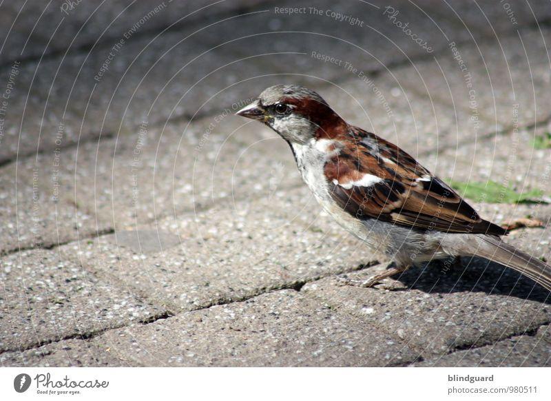 Be good to birds Street Animal Bird 1 Stone Feeding Looking Brash Point Brown Gray Black White Appetite Metal coil Colour photo Exterior shot Deserted Day Light