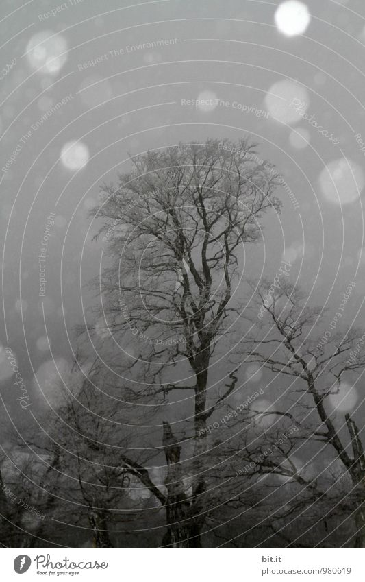 Tree Winter Dark Forest Cold Sadness Snow Death Snowfall Ice Dangerous Future Climate Threat Frost Grief