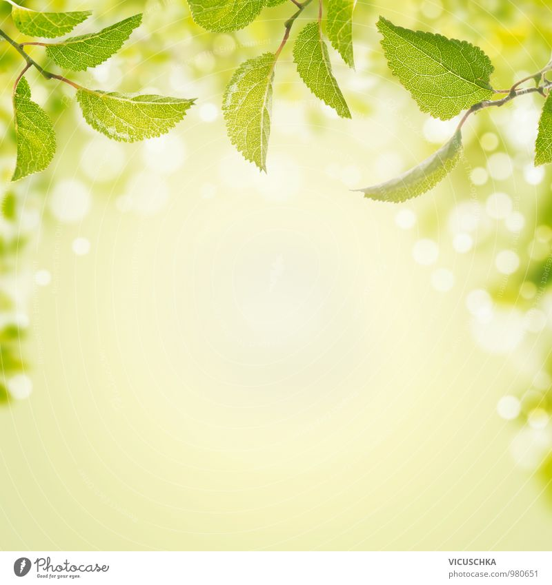 Nature Plant Green Summer Sun Leaf Forest Spring Style Background picture Garden Park Air Design Beautiful weather Sign