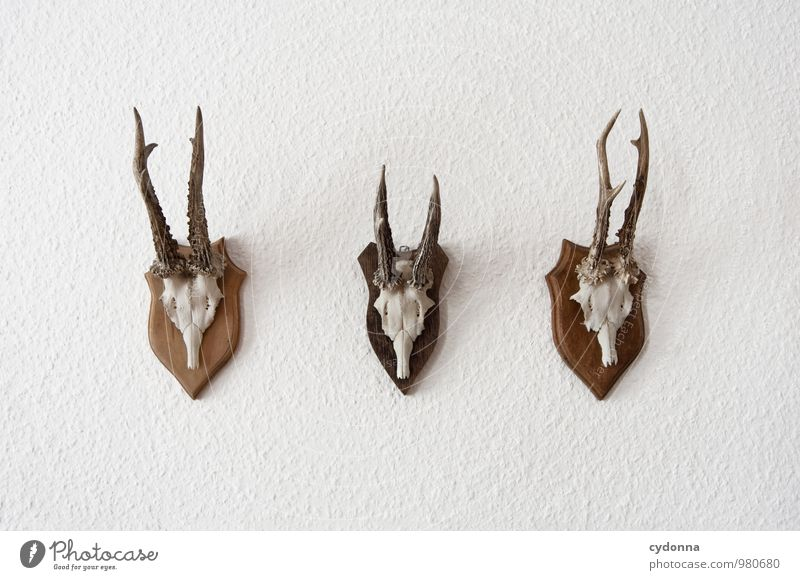 Animal Wall (building) Death Style Wall (barrier) Lifestyle Head Room Decoration Design Wild animal Success Esthetic Group of animals Transience Uniqueness