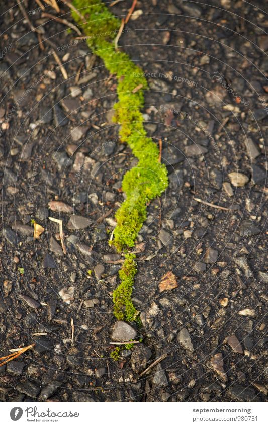 Nature City Green Gray Stone Fresh Thin Moss