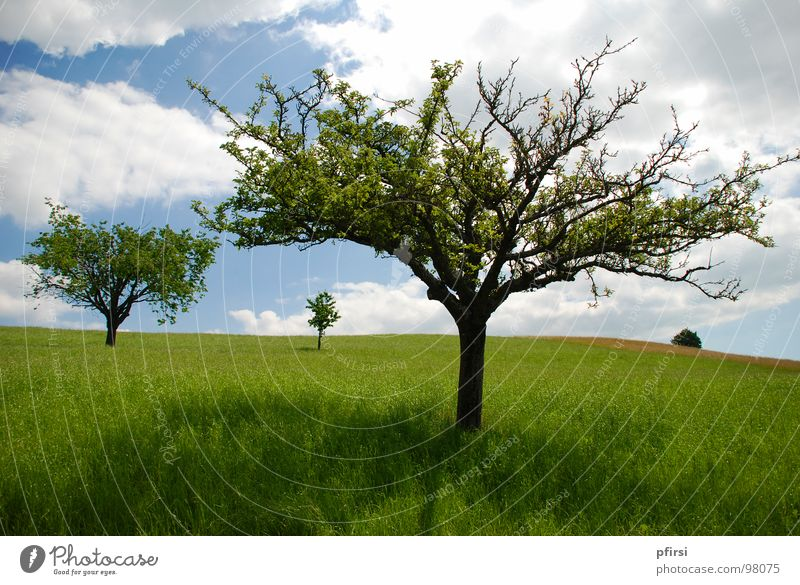 Nature Sky Tree Sun Green Blue Summer Clouds Meadow Grass Spring Warmth Bright Field Happiness Physics