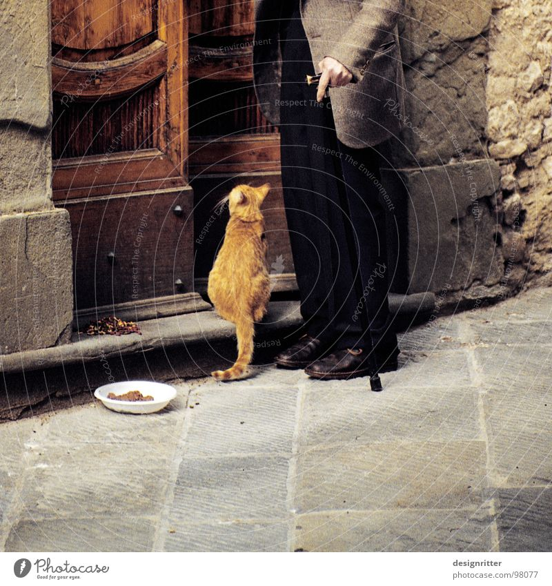 Cat Human being Loneliness Love Life Senior citizen Friendship Together Flat (apartment) Living or residing Help Safety Trust Appetite Society Concern