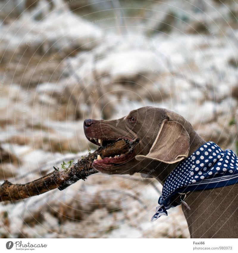 Dog Nature Blue White Joy Animal Winter Forest Environment Snow Wood Playing Healthy Freedom Brown Work and employment