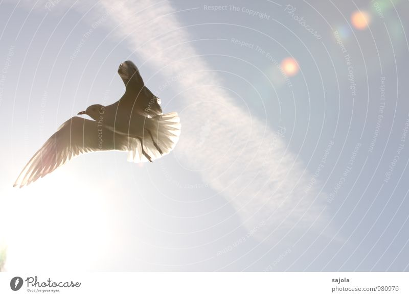 Seagull in the light Animal Sky Clouds Sun Sunlight Wild animal Bird 1 Flying Blue White Freedom X-rayed Wing Colour photo Exterior shot Deserted