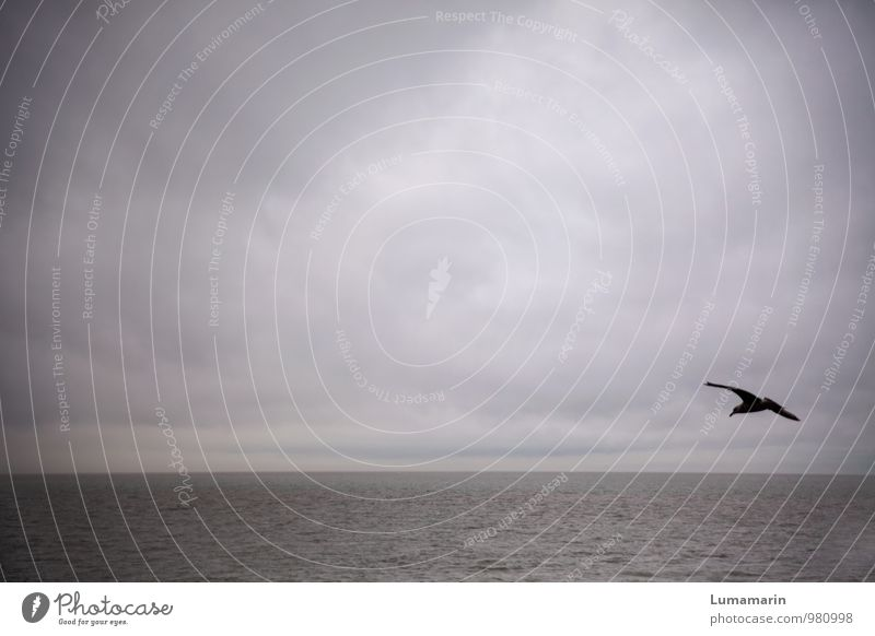 solo trip Landscape Sky Clouds Horizon Bad weather North Sea Animal Bird Seagull 1 Flying Vacation & Travel Free Infinity Cold Rebellious Blue Adventure