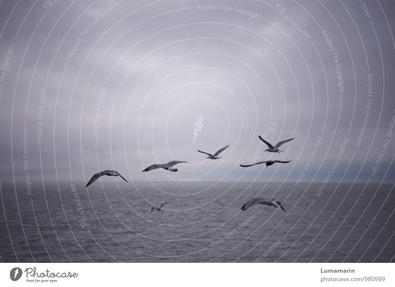 group trip Landscape Sky Clouds Horizon Bad weather North Sea Animal Bird Seagull Group of animals Flock Flying Vacation & Travel Free Infinity Cold Blue