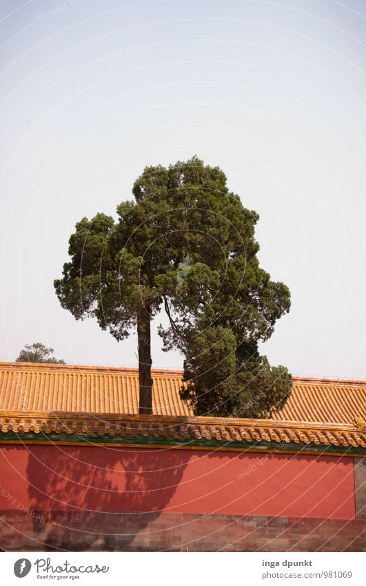 City Plant Tree Environment Wall (building) Wall (barrier) Growth Power Tourism Large Esthetic Clean Culture Capital city Tourist Attraction Positive