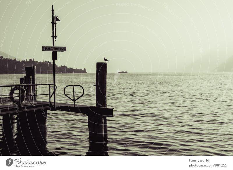 Bridge with bird Leisure and hobbies Dark Lake Lakeside Footbridge Jetty Lake Garda Silhouette Wooden stake Longing Wanderlust Loneliness Romance Idyll Peaceful