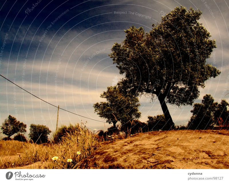 Sky Nature Green Beautiful Tree Vacation & Travel Plant Sun Summer Loneliness Landscape Life Meadow Lanes & trails Wall (barrier) Dream