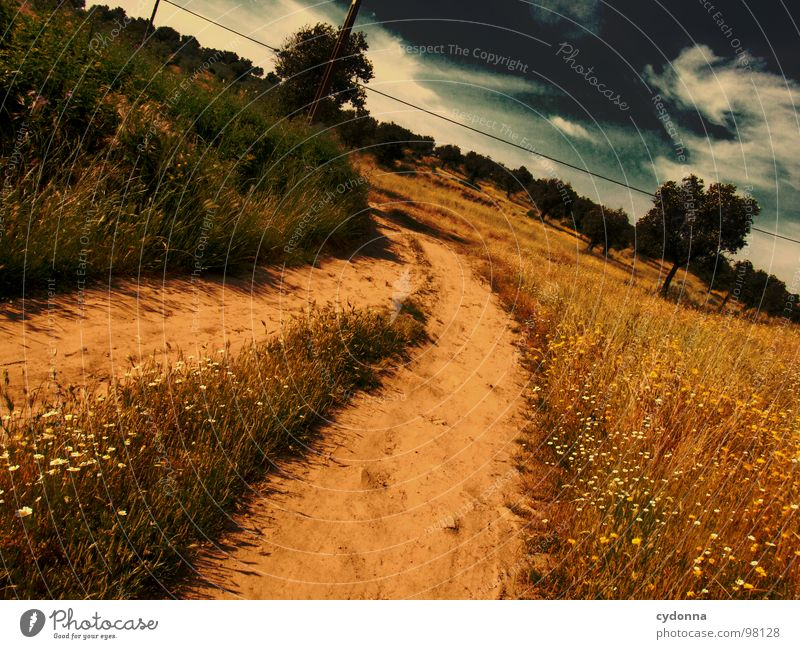 Sky Nature Green Beautiful Tree Vacation & Travel Plant Summer Loneliness Landscape Life Meadow Grass Lanes & trails Sand Dream