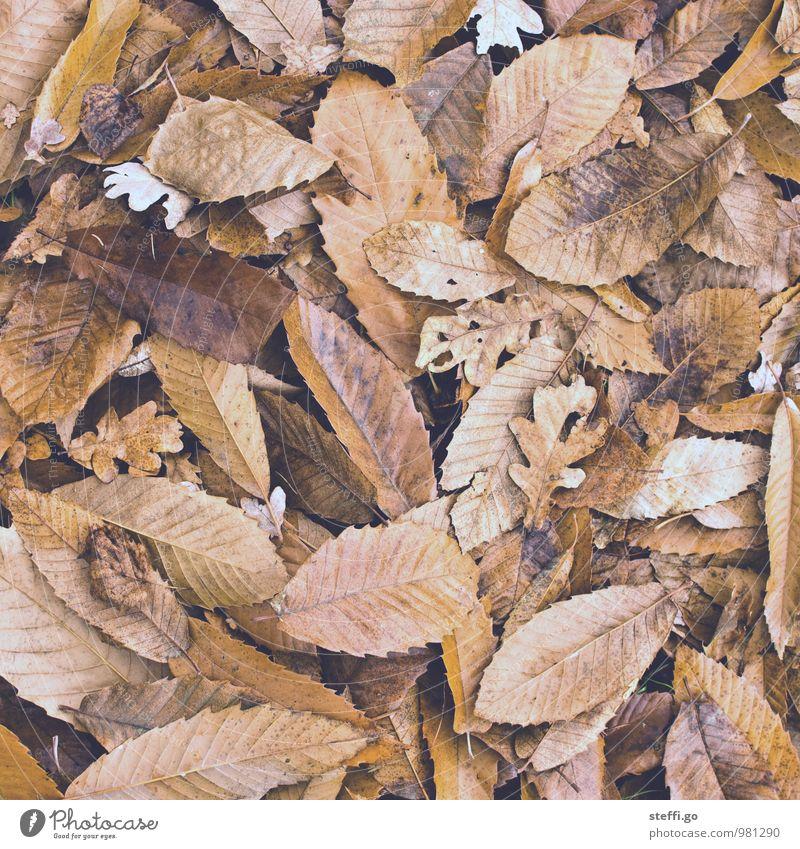 Old Plant Leaf Forest Autumn Line Brown Park Trip Adventure Autumn leaves Autumnal Limp Rachis Autumnal colours Early fall