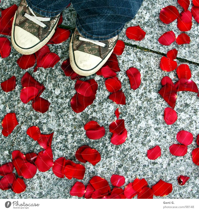Red Happy Stone Footwear Broken Clothing Rose Jeans Asphalt Delicate Fragrance Odor Tradition Destruction Chucks Matrimony