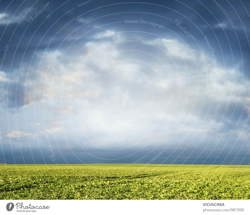 Green field and cloudy sky Design Summer Nature Plant Sky Clouds Horizon Spring Autumn Thunder and lightning Agricultural crop Meadow Field Jump