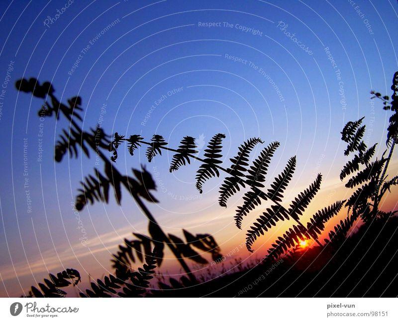 Nature Green Beautiful Plant Sun Summer Joy Black Landscape Freedom Park Field Protection Seasons Twig Snapshot
