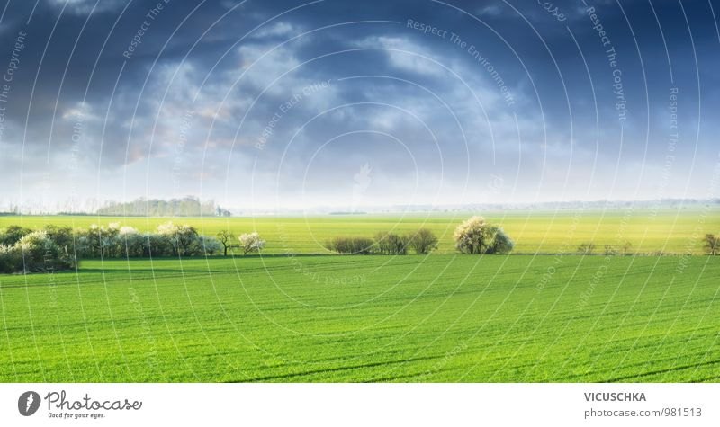 Sky Nature Plant Green Summer Sun Landscape Clouds Meadow Spring Background picture Jump Horizon Field Wild Fog