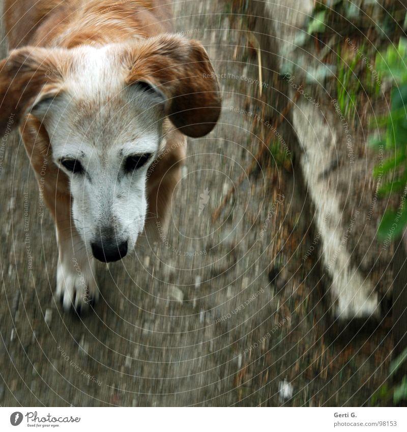 Old Animal Grass Garden Gray Dog Stone Sadness Lanes & trails Brown Going Walking Grief Asphalt Transience Distress