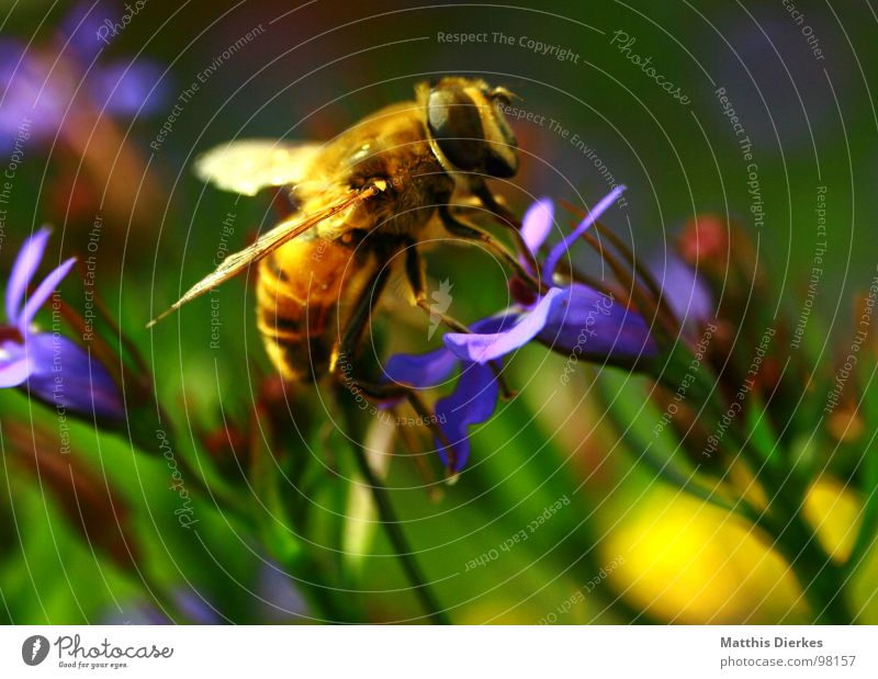 Plant Flower Summer Animal Colour Eyes Yellow Nutrition Garden Food Dangerous Wing Threat Drinking Insect Bee
