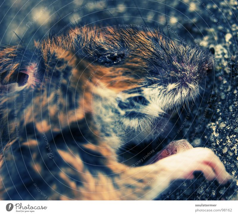 Animal Eyes Death Life Hair and hairstyles Small Nose Wet Nutrition Cute Transience Ear Pelt Mouse Paw Mammal