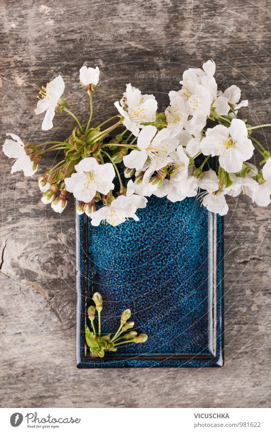 Blue ceramic bowl with white cherry blossoms Style Design Garden Decoration Nature Plant Spring Blossom Blossoming Retro Fragrance Frame Background picture