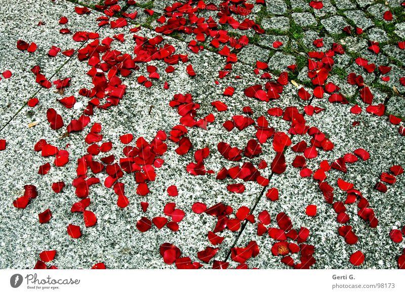 Red Happy Stone Broken Rose Jeans Asphalt Delicate Fragrance Odor Tradition Destruction Matrimony Moral Distribute Building rubble