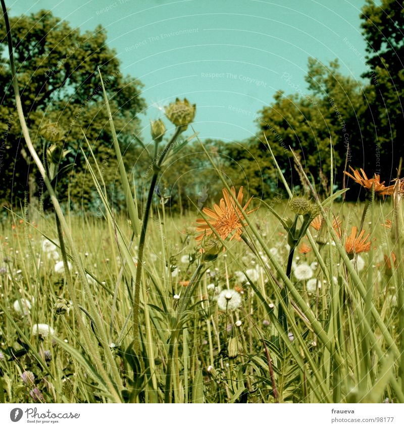 Nature Sky Flower Green Summer Calm Yellow Colour Meadow Grass Austria Summery Yellowed Edge of the forest