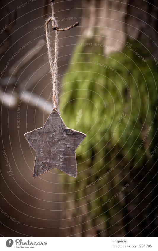 starlet on branch Christmas & Advent Nature Plant Tree Moss Tree trunk Christmas tree decorations Tree bark Branch Park Forest Wood Star (Symbol) Hang To dry up