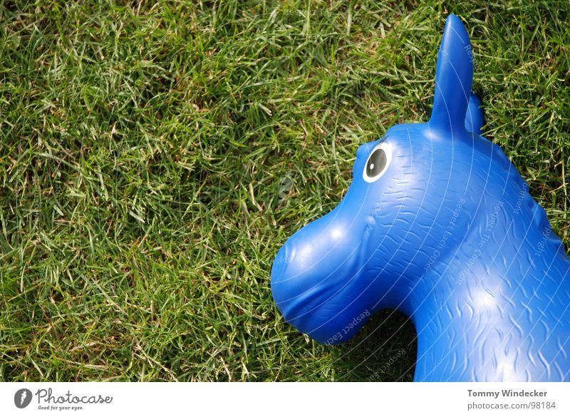 blue mould Horse Meadow Grass Blade of grass Green Toys Summer Rubber Playing Hop Easter gift Rocking horse Rubber toy animal Equestrian sports Lawn Blue Statue