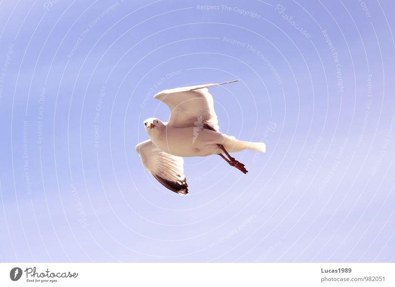 Sky Nature Blue White Sun Animal Freedom Flying Bird Aviation Observe Beautiful weather Seagull Gull birds