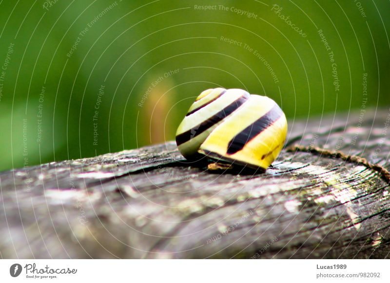 Nature Green Black Environment Yellow Meadow Wood Brown Wooden board Snail Disgust Chopping board Slowly