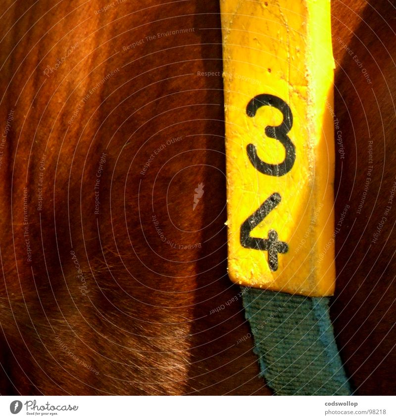 Digits and numbers Hide String Mammal Quality Dairy Products Identify