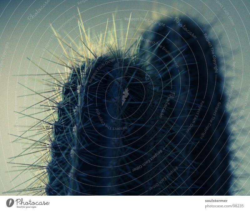 Flower Green Plant Desert Pain Visual spectacle Cactus Thorn Hurt
