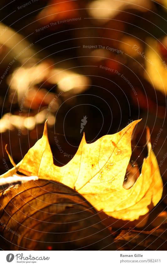 Nature Plant Beautiful Loneliness Leaf Calm Autumn Happy Uniqueness Retro Romance Serene Caution Patient Wisdom
