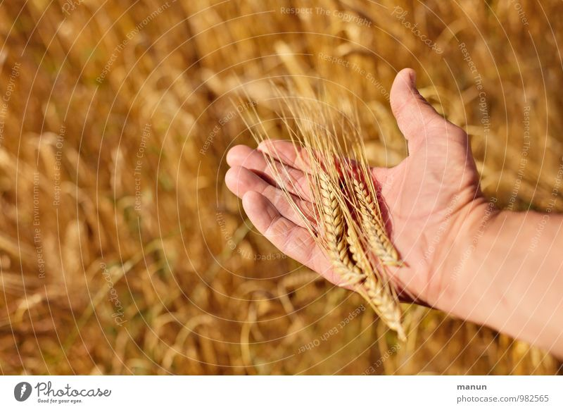 another grain Food Grain Nutrition Organic produce Profession Kitchen Baker Bakery Miller Agriculture Forestry Genetic engineering Masculine Hand Fingers 1