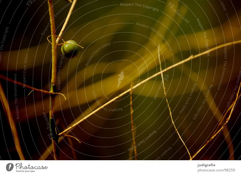 Nature Beautiful Plant Summer Loneliness Colour Line Environment Growth Round Bushes Sphere Twig Flourish