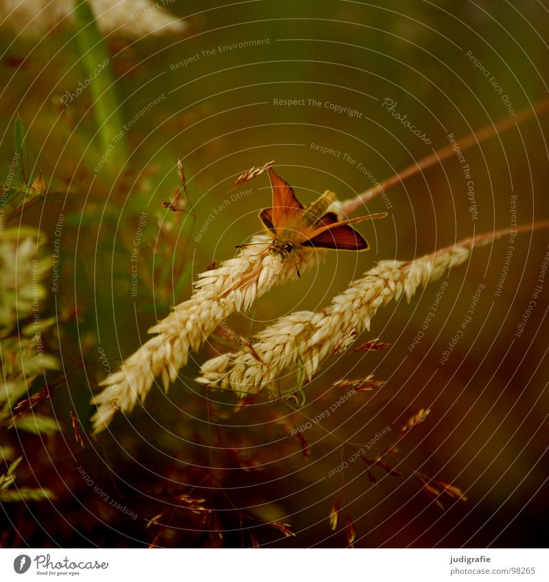 Green Beautiful Plant Animal Colour Meadow Grass Glittering Soft Delicate Pasture Insect Butterfly Stalk Blade of grass Smooth