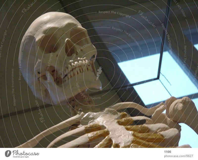 skeleton Skeleton Death's head