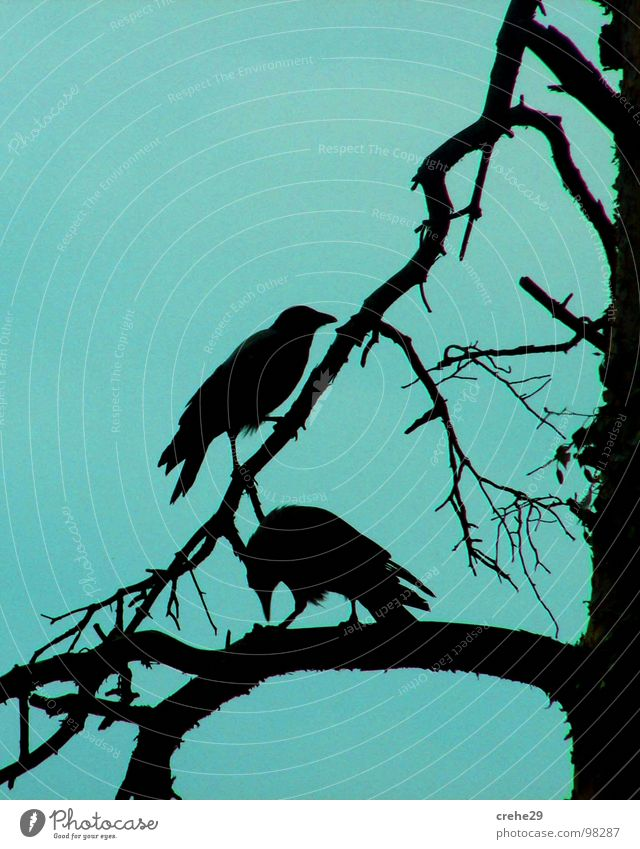 Sky Tree Blue Black Bird Pair of animals In pairs Branch
